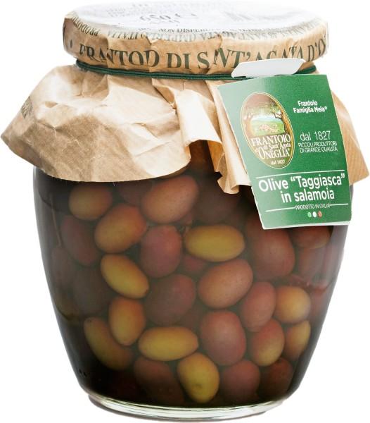 Taggiasca-Oliven mit Stein